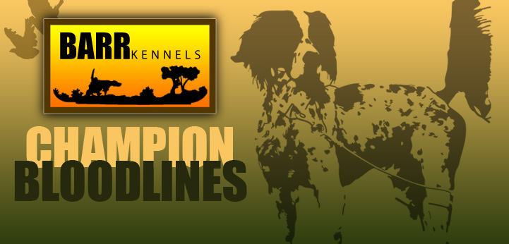 Barr Kennels Champion Bloodlines